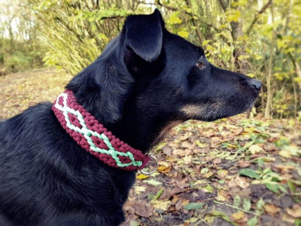 Flechthalsband Hundehalsband